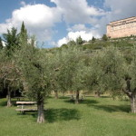 oliveto - Agriturismo La Piaggia di Assisi
