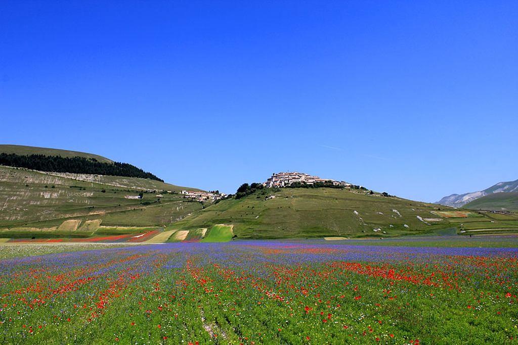 Fioritura castelluccio di norcia - Il giardino dei ciliegi assisi ...