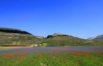fioritura - © www.norcia.net