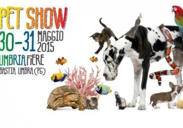 Pet Show 2015